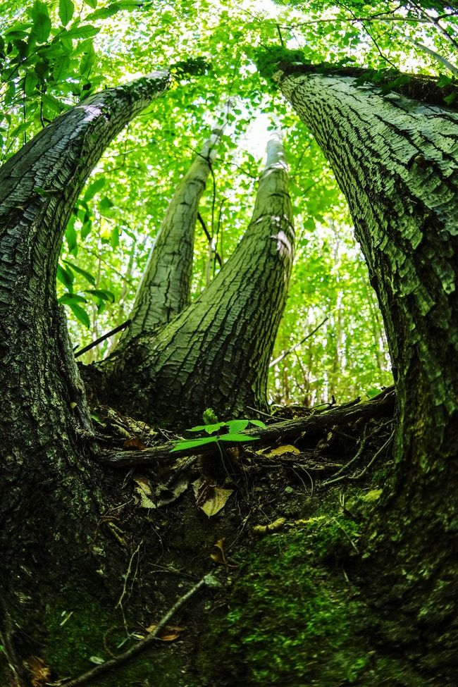 In the forest Lookingup Taking Photos Nature Photography Tree_collection  TreePorn Nature_collection Fish-eye Lens Summer Memories 🌄 Eye4photography  EyeEm Best Shots Open Edit Adventure Club