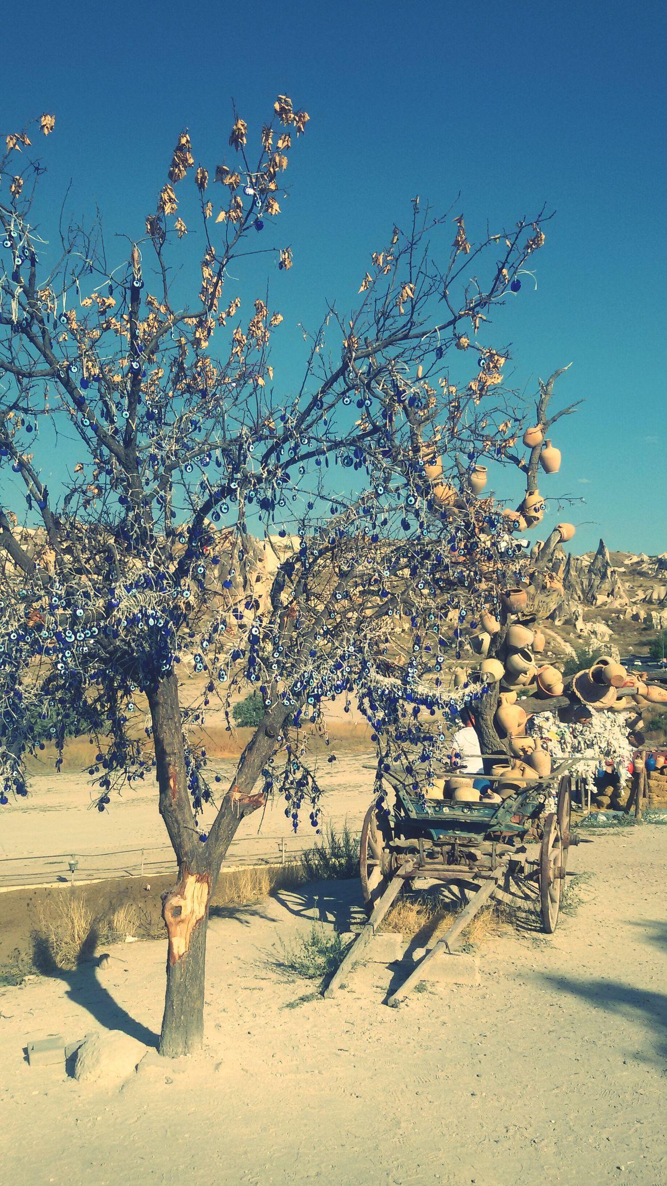 Trees TreePorn Wish Tree Camping First Eyeem Photo Amezing Perfect Wandering