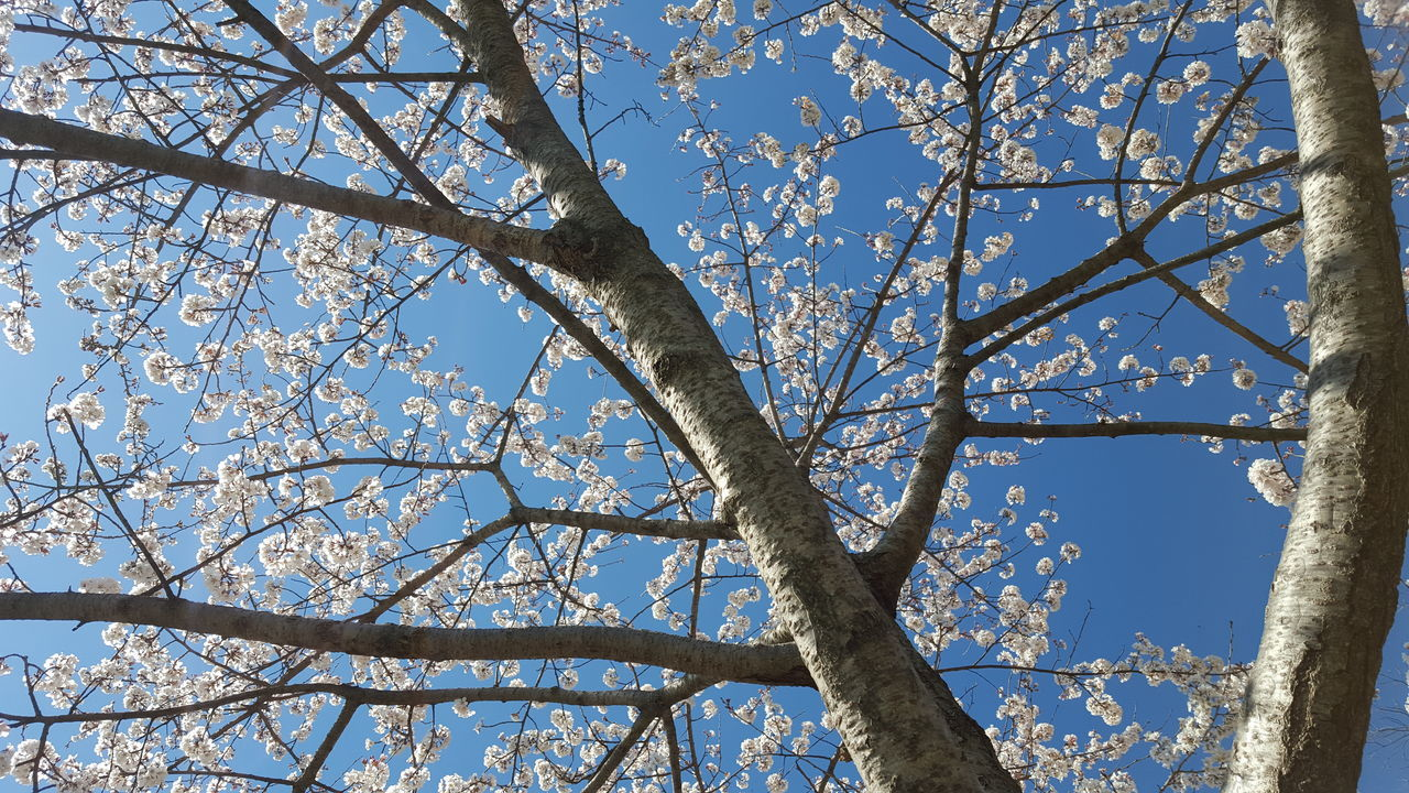 CLOSE-UP OF BARE TREE AGAINST BLUE SKY