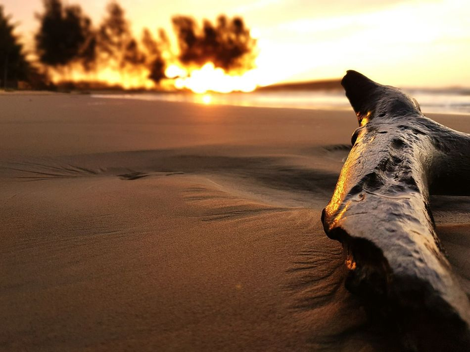 One Animal Sunlight Sea Sunset Animal Themes Nature Animal Wildlife Sand Animals In The Wild Beach Sand Dune Outdoors Beauty In Nature Landscape Sky One Person Day Horizon Over Water Water Mammal