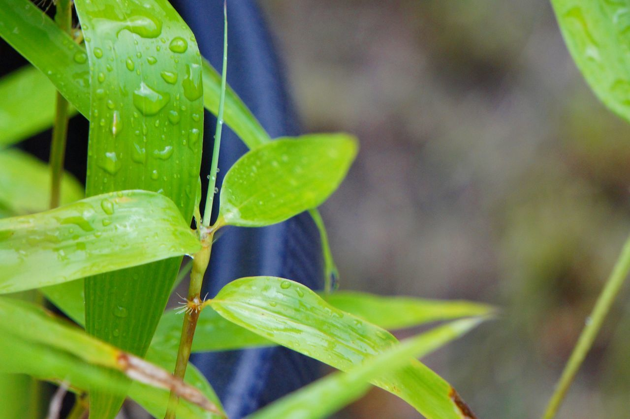 leaf, green color, growth, plant, nature, close-up, day, drop, beauty in nature, freshness, outdoors, water, no people, fragility