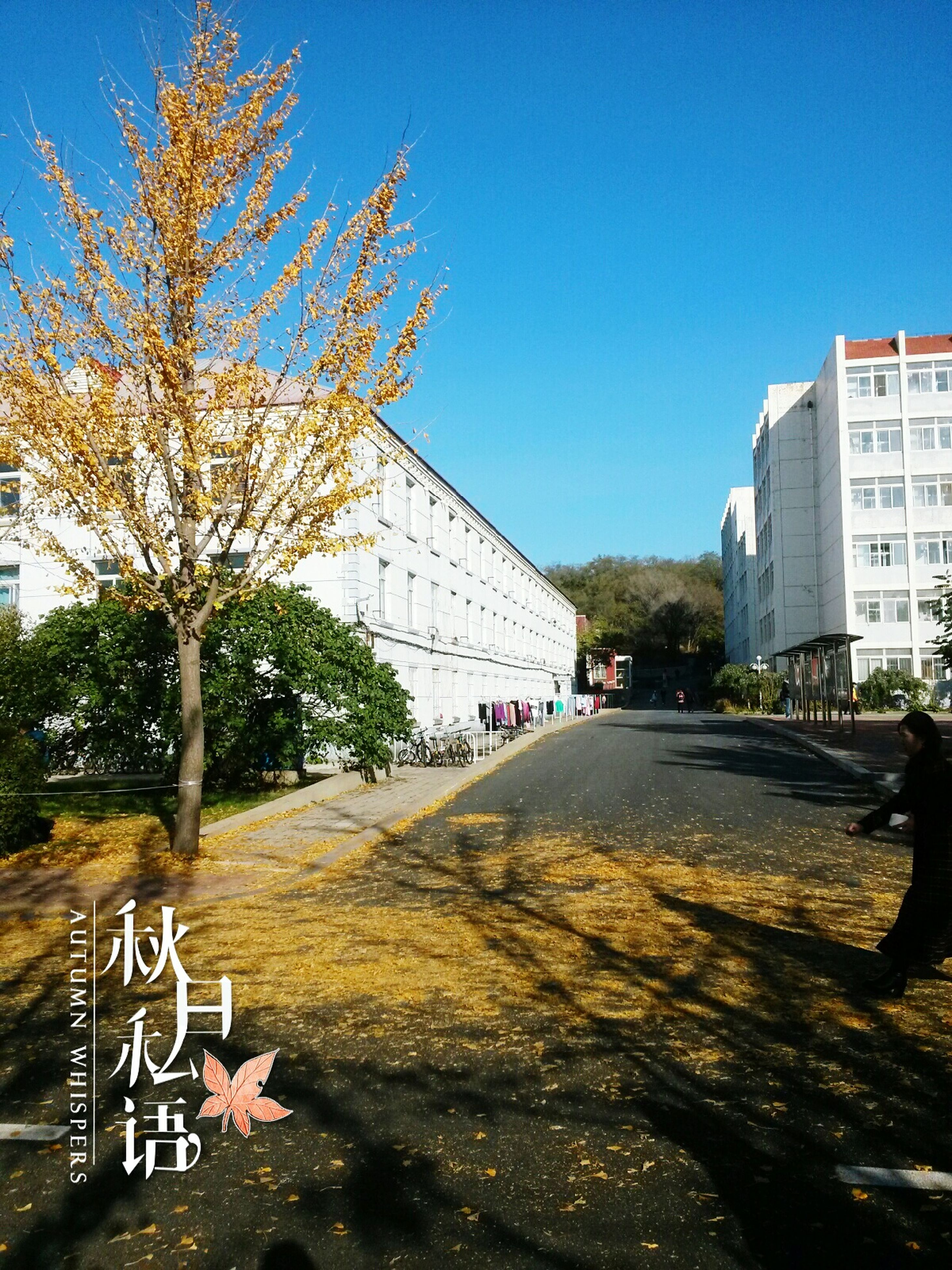 architecture, building exterior, built structure, clear sky, city, blue, tree, street, road, building, sunlight, graffiti, day, shadow, residential structure, copy space, residential building, transportation, outdoors, incidental people
