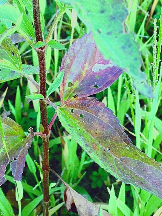 Purple Plant autumn Hedgewitch Wicca