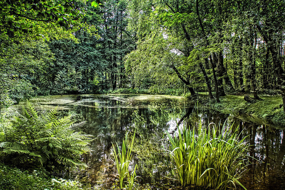 Beauty In Nature Day Forest Green Color Growth Hariksee Idyllic Lake Majestic Nature Nature Non-urban Scene Plant Reflection Scenics Standing Water Tranquil Scene Tranquility Tree Tree Trunk Water Waterfront Wilderness WoodLand Wouden