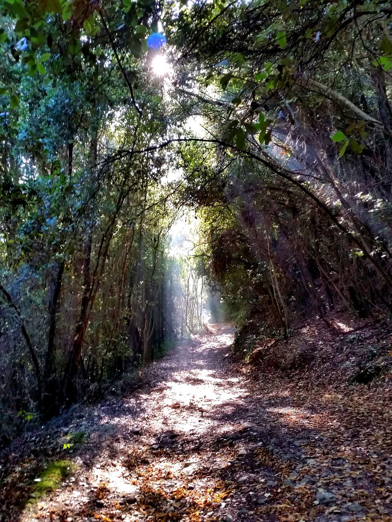 Conero Monte Conero Ancona Marche Italia Bosco Albero Tree Alberi Trees Raggi Raggiodisole Outdoors Nature Ray Of Light Rays Rayoflight Rays Of The Sun Autunno  Autumn