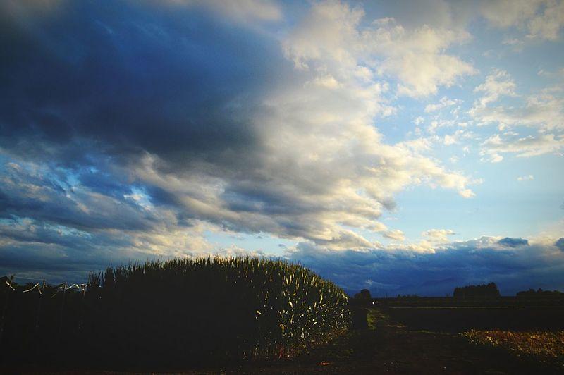 はたけ 夏 Landscape Clouds Clouds And Sky Taking Photos Light And Shadow Sky Nature Nature_collection Cloud 畑
