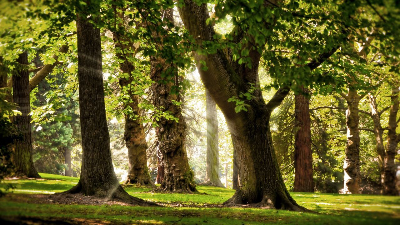 tree, tree trunk, forest, nature, sunlight, day, outdoors, green color, no people, growth, woodland, tranquility, tranquil scene, scenics, beauty in nature, grass, landscape