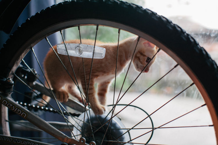 cute kitten playing on a bicycle Bicycle Bike Cat Cat, Pets, Animal Close-up Cloud Cloud - Sky Cropped Cute Cute Cat Cute Cats Cute Kitten Cute Pets Day Focus On Foreground Kitten Kittens Low Angle View Nature No People Outdoors Part Of Pet Pets Sky First Eyeem Photo