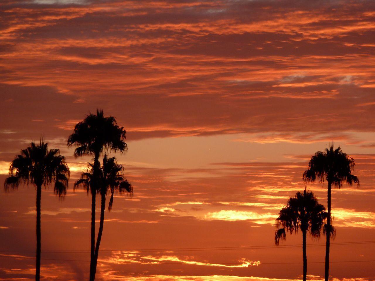 Sunrise Orange Sky Palm Trees Dramatic Sky Dramatic Sunrise No Filter Palm Tree Silhouette Catalina Island