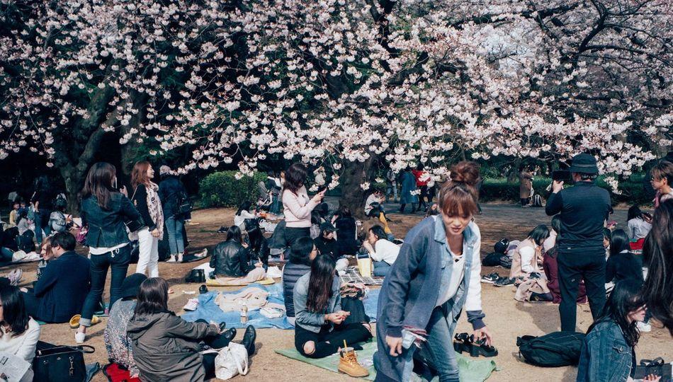 Colors 35mm Light And Shadow EyeEm Best Shots Street Photography Leicacamera Streetphotography Tokyo Street Photography Film Film Photography Sakura Flower Spring