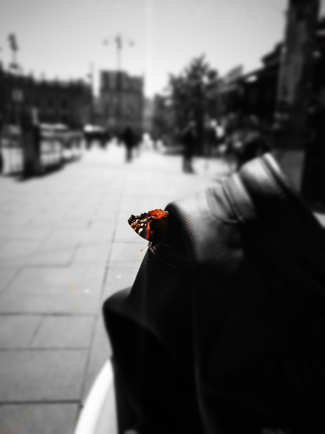 Butterfly Outdoors Day City Nature Beauty In Nature Colorful Color Photography Artphotography Love Napoliphotoproject Napolidavivere Napoli_foto Napolinstagram Napolinelcuore Sky Napoli Single Object First Eyeem Photo Artistic Photo Arcobaleno  Aroundtheworld Colour Of Life