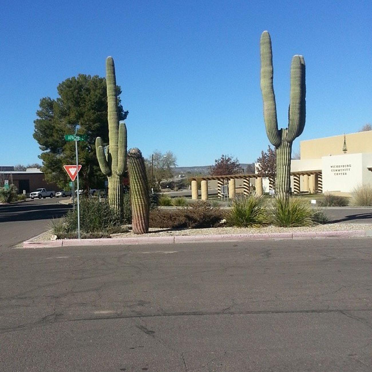 Cacti Wickenburg Arizona