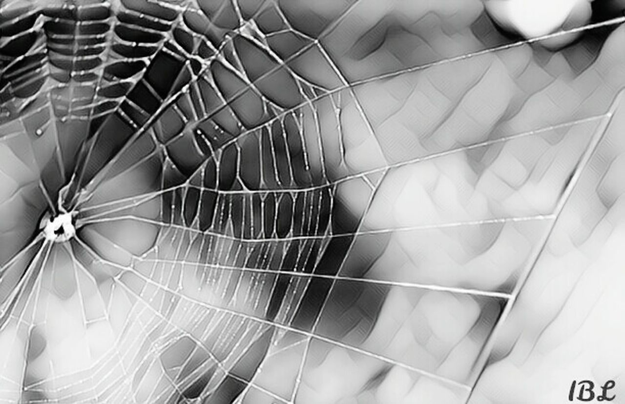 Close-up Complexity Fragility No People Full Frame Blackandwhite Spiderweb Special Effects Popular Photos EyeEm Best Shots Eyemphotography Nature