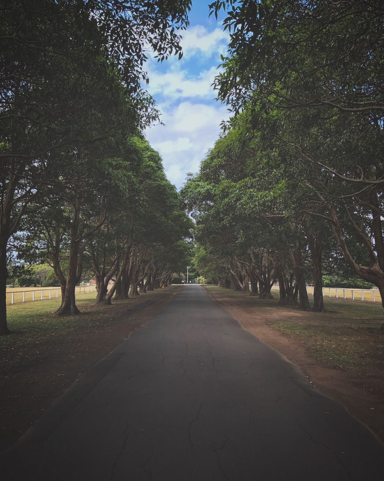 Never stop exploring Tree Nature The Way Forward Treelined Outdoors Road Sky No People Tranquility Growth Beauty In Nature Day Tranquil Scene Scenics Australia Nature_collection Nature_perfection Beauty In Nature Awesome_shots Special👌shot