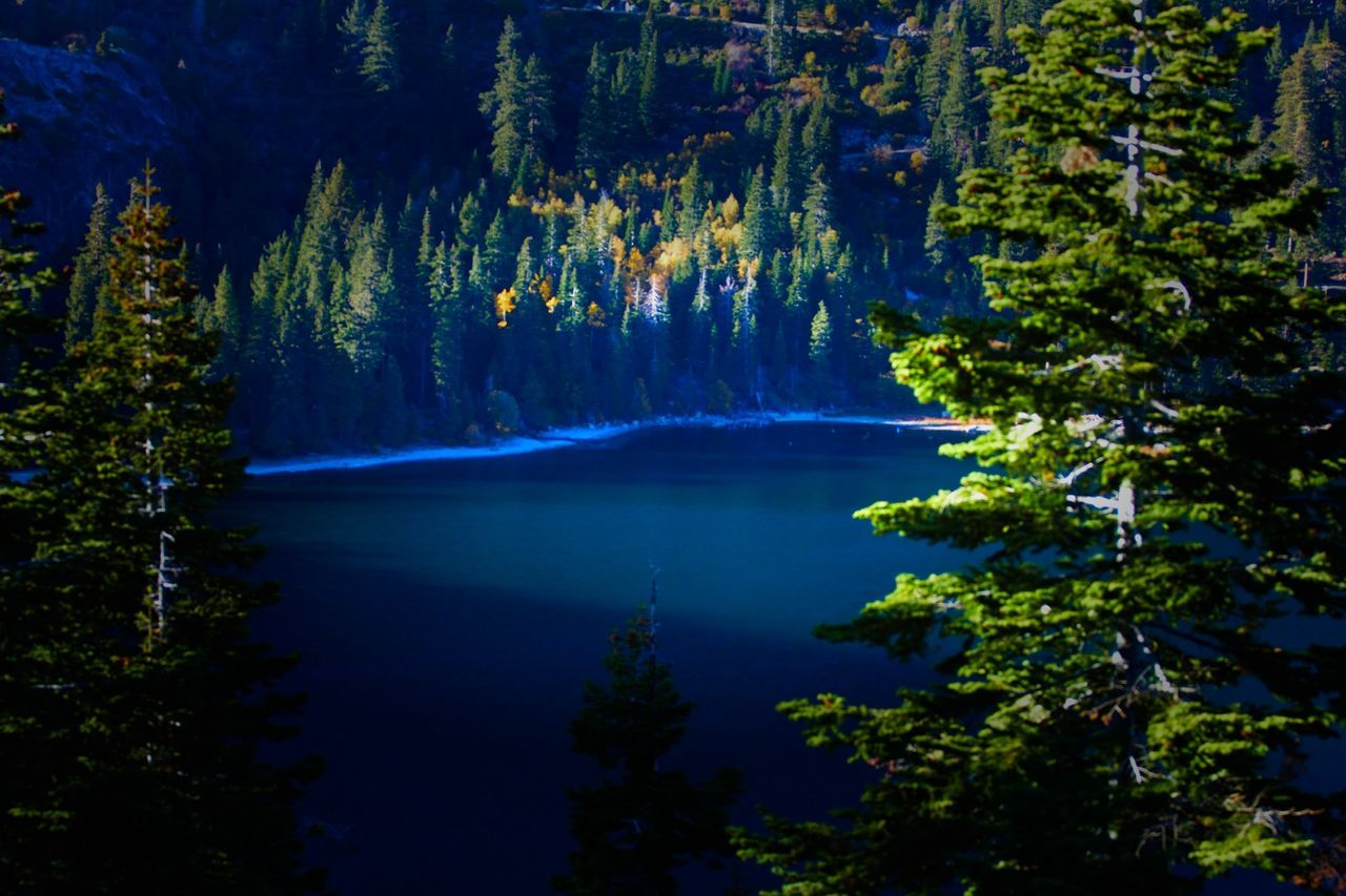 tree, nature, beauty in nature, scenics, tranquil scene, tranquility, no people, forest, water, outdoors, plant, growth, lake, day, mountain, sky