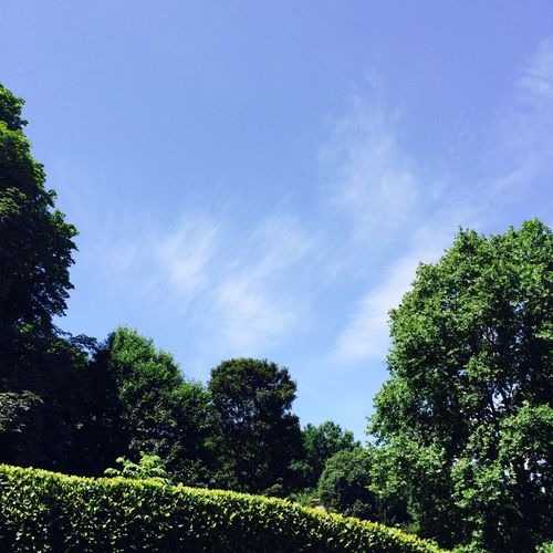 Sky Blue Sunny