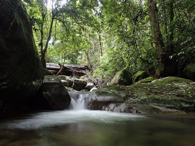 Malaysia Forest Beauty In Nature Forest Gunung Liang Long Exposure Mini Waterfall Nature Non-urban Scene Scenics Tranquil Scene Tranquility