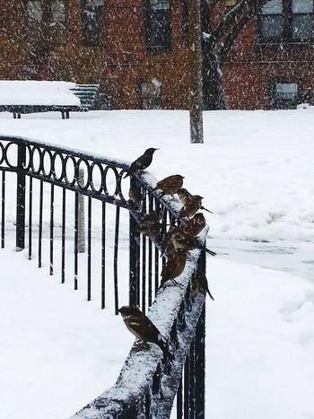Snow Birds Snow ❄ Snow Day ❄ Falling Snow Grey Day Boston Weather