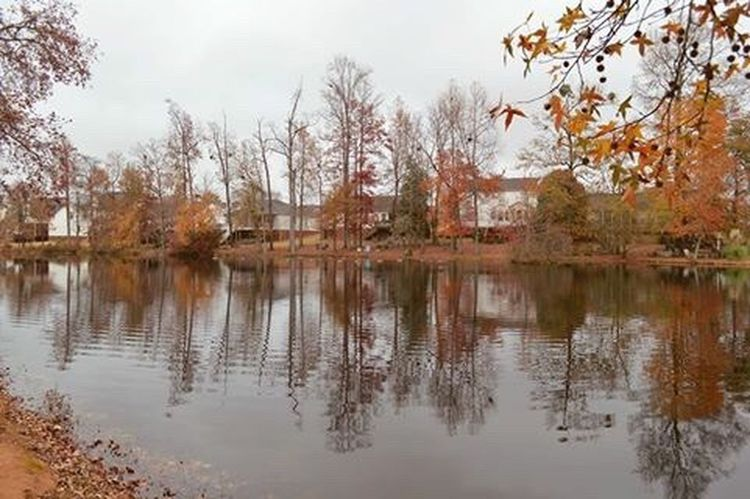 Water Reflection Lake Autumn Tree Tranquility Change Tranquil Scene Beauty In Nature Nature Branch Outdoors Mauldinsouthcarolina Greatergreenvillesc Fall Fallbeauty Changingleaves MyPhotography Portfolio Neighborhood Old Neighborhood Winterscene Day Nikon D3200 Carolinas