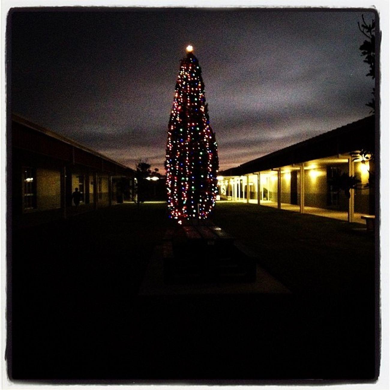 Christmastreeatschool Centercourt Oaksteadelementary @pascoschools Pretty lights beautifulmorning december cool christmasisin21days yikes