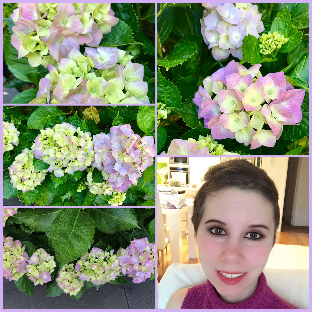 The hydrangeas are starting to bloom real pretty now. They've had a slow start this year, but I'm glad to see them all popping out 🌸😊🌸 there's still alot of little green buds on top of the bush, but all the bottom flower's are blooming now. When the rest of them bloom, I will take a photo of the whole bush 🌸✌🏼️😊🌸 #hydrangeas #Flowers #hydrangeabush #Blooming #Beautiful #Nature #Home #Garden🌸