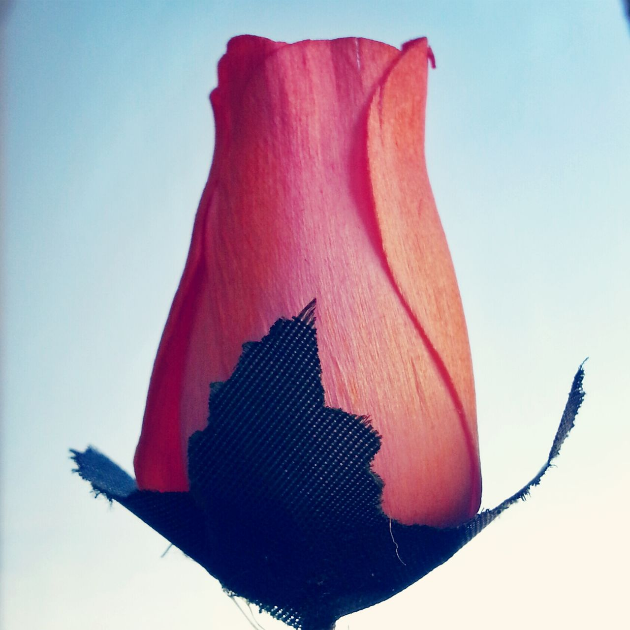 Beautiful stock photos of pink, Art, Artificial, Bud, Close-up