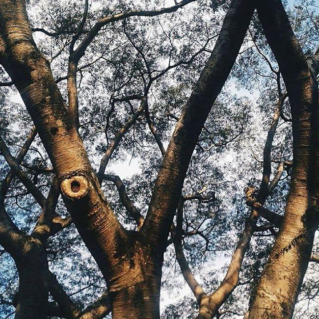 Fim de tarde Natural Light Florest Tree Colour Instamood Dotefotografico Thevisualsbrasil Brasilfolk Folkbrasil Cymera Beaty SP 011 Instapicten Vscogaleria VSCO Vscofotografia_ Vsconatural Vscofolk Vscoamadores_
