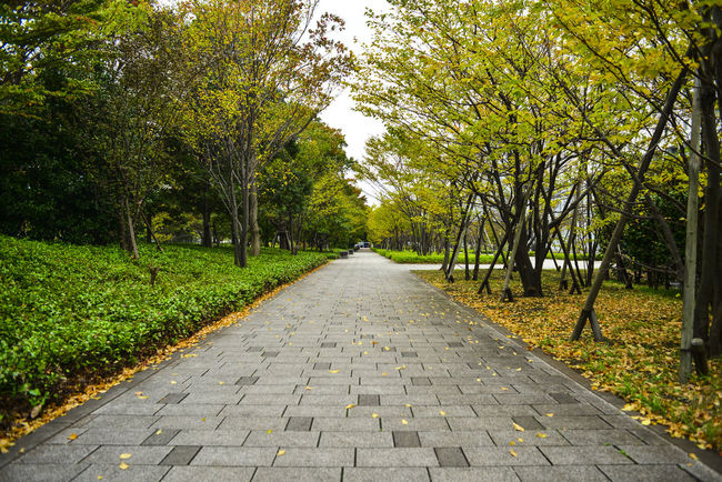 Branch Diminishing Perspective Footpath Growth Nature Nikon D600 Odiba Park - Man Made Space The Way Forward Tranquility Tree Treelined Vanishing Point Walkway Ultimate Japan