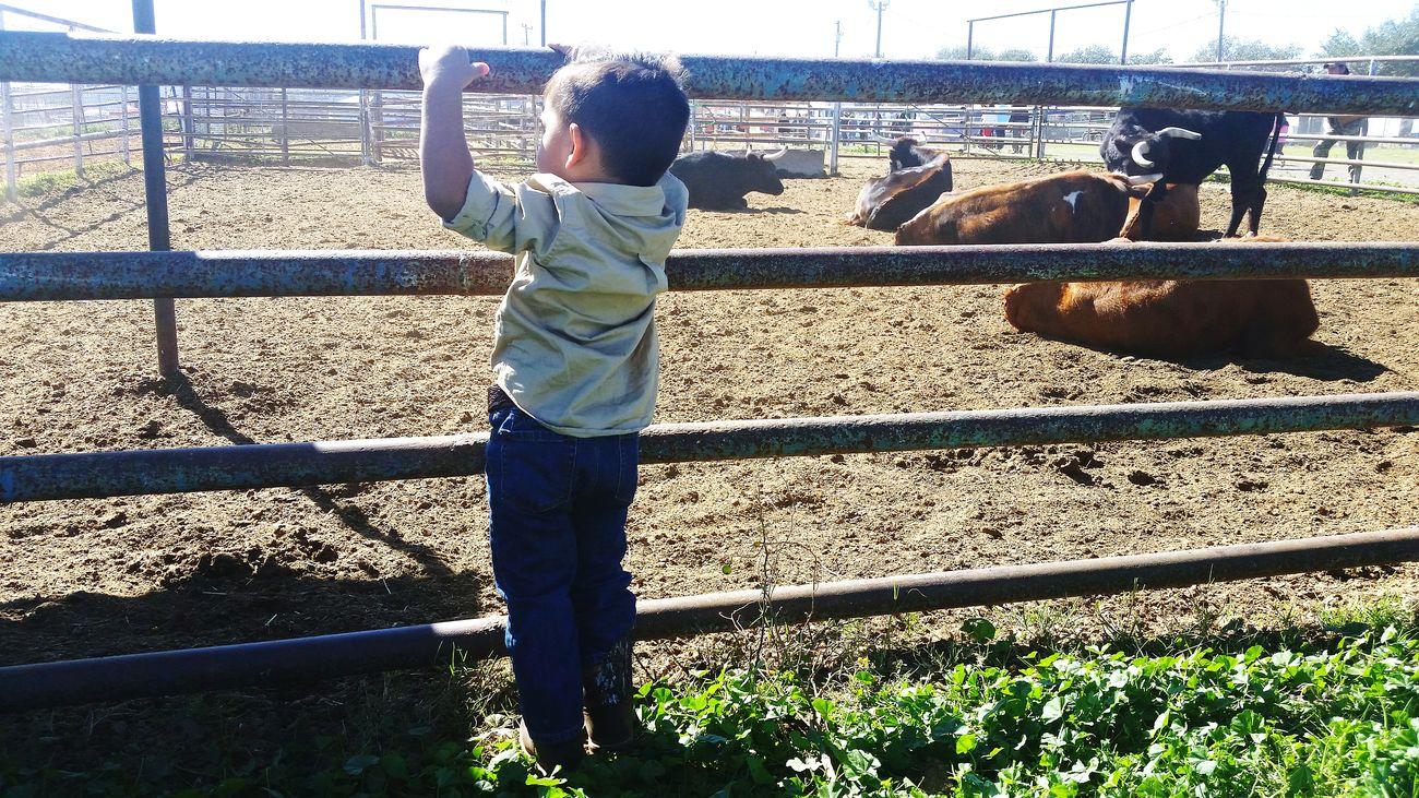 Cowboy Nephew  Lifedowns GrowingUp Cows Ranch Life Little Boy Wrangler Boots