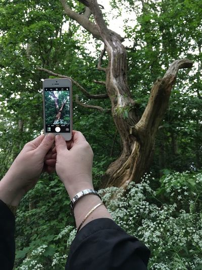 Second Acts Tree Human Hand Smart Phone Communication Nature