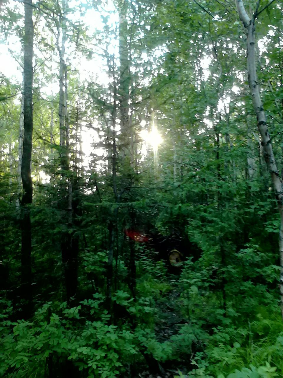 tree, forest, nature, growth, no people, tranquility, green color, tranquil scene, day, outdoors, beauty in nature, plant, scenics, freshness