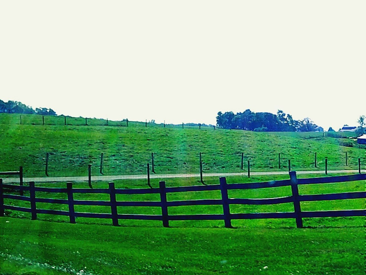 field, grass, rural scene, agriculture, green color, landscape, nature, scenics, no people, tranquil scene, beauty in nature, outdoors, clear sky, paddock, tranquility, growth, day, sky, tree