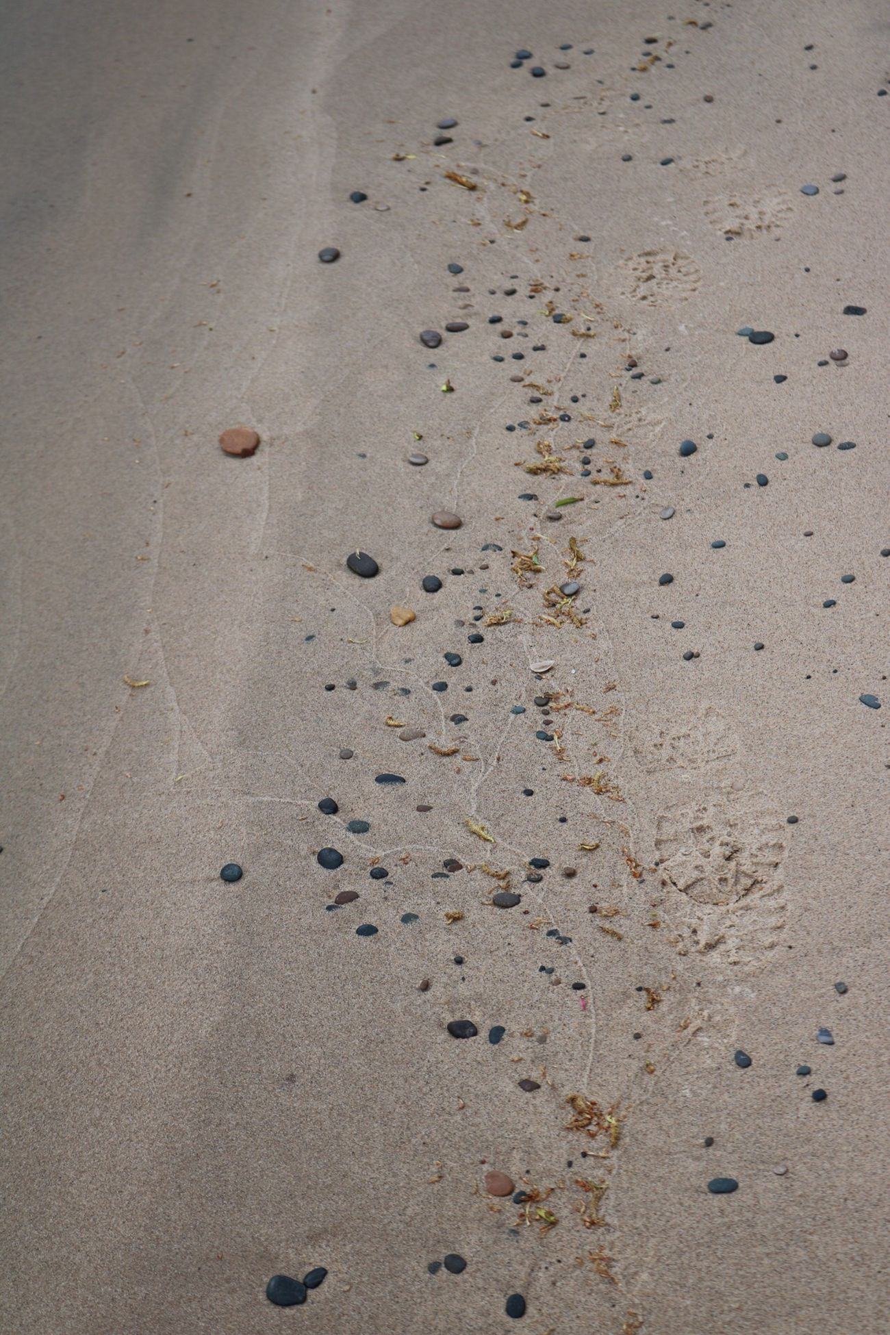 Pebbles On A Beach Sand Beach FootPrint Paw Print Animal Track Outdoors Day Nature Track - Imprint No People Close-up