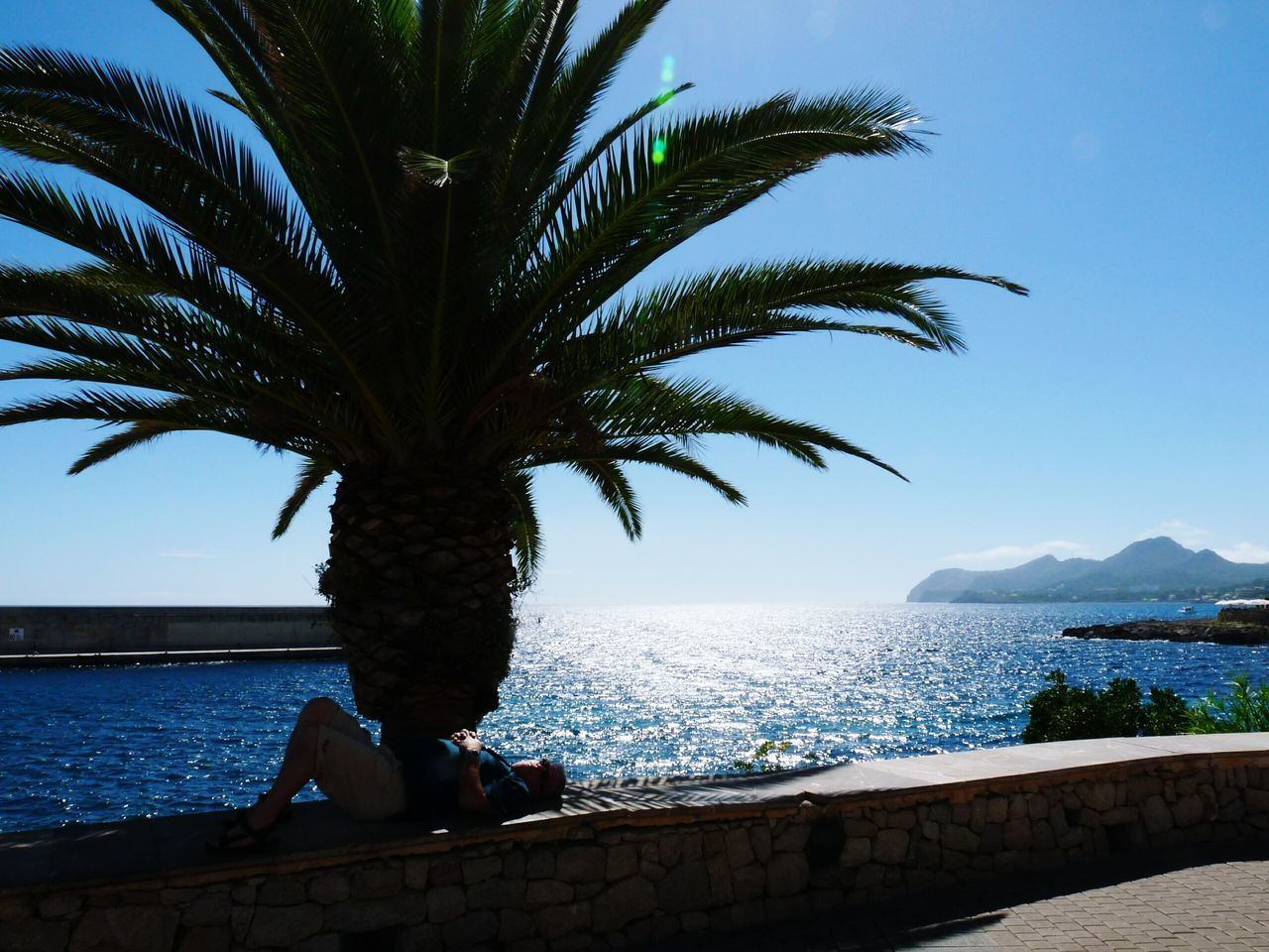 Man Sleeping On Retaining Wall By Palm Tree At Shore Against Sky
