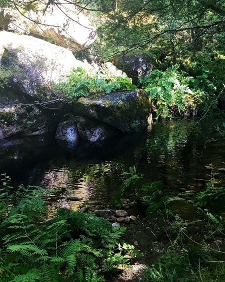 Nature Water Tree Beauty In Nature Forest Tranquility Rock - Object River Tranquil Scene