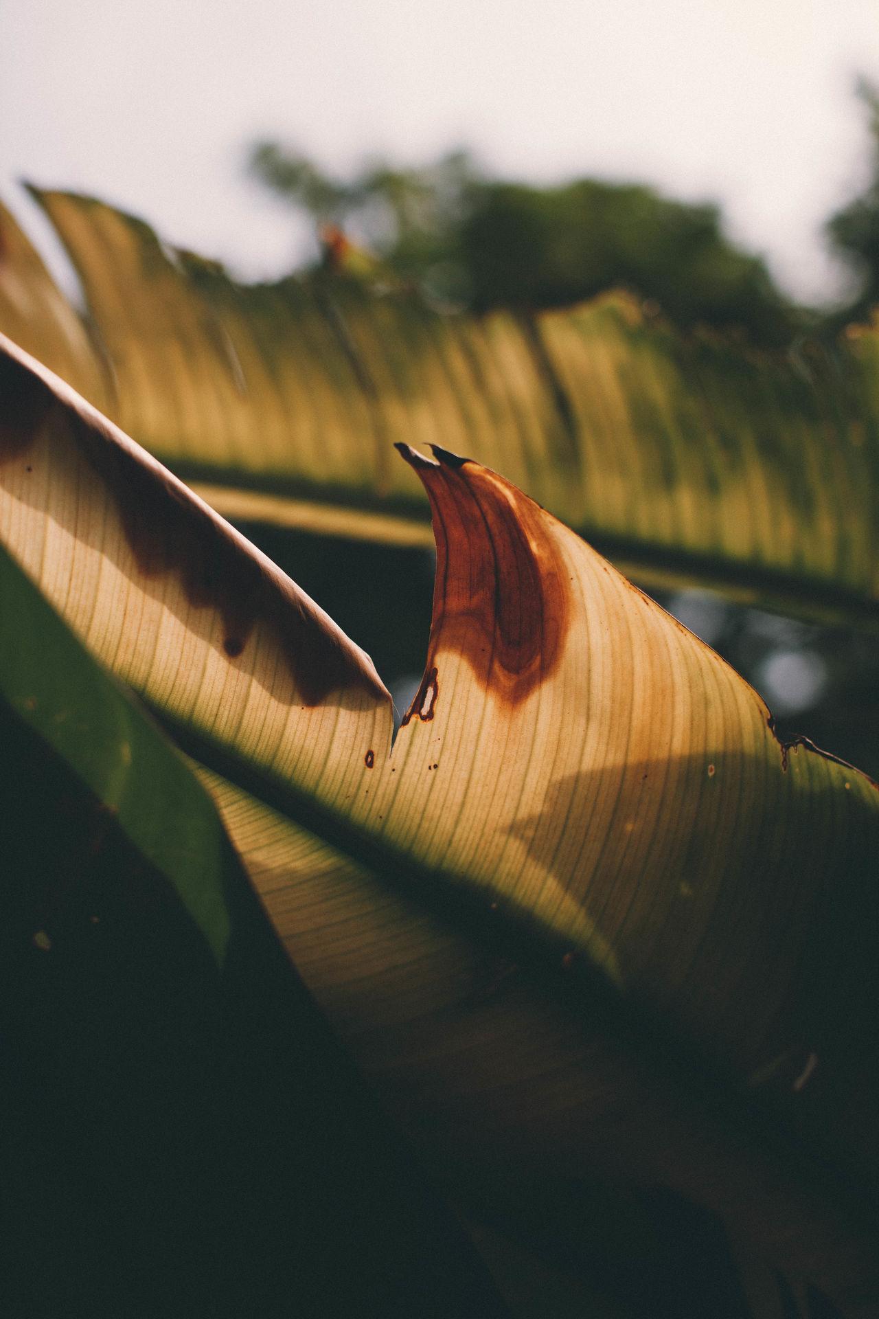 Close-up Leaf Leaves Outdoors Palm Palm Leaf Palm Tree Palm Trees Tree