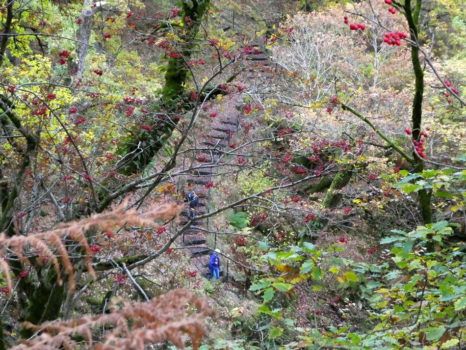 Chance Encounters Steps Ancient Woodland Woodland Walk People Distant View High Angle View Autumn Colors Berries EyeEm Best Shots Outdoors Leisure Activity Autumn Personal Perspective Beauty In Nature Nature EyeEm Nature Lover Trees