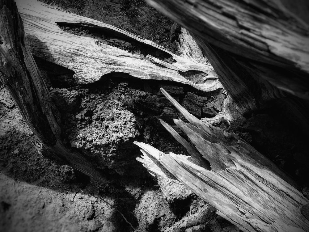 Abstract Photography Light And Shadow Natural Collages Deceptively Simple AMPt - My Perspective Shapes In Nature  Nature Collection Blackandwhite Photography Textures And Surfaces Abstract Nature