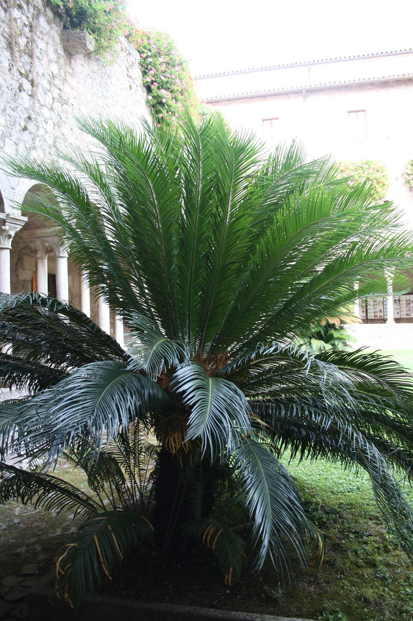 growth, palm tree, plant, leaf, day, green color, nature, tree, outdoors, architecture, no people, beauty in nature, close-up