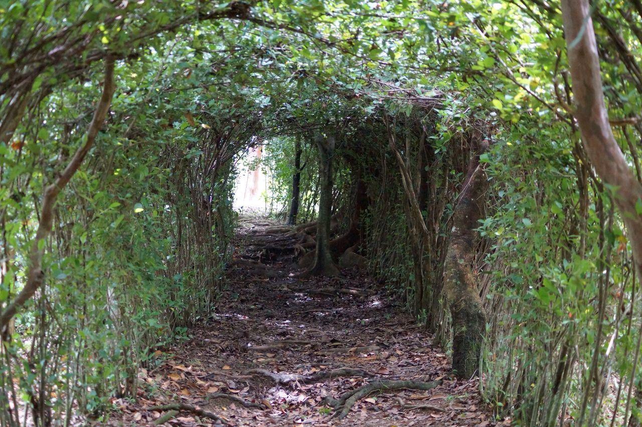 Tunel Arboles , Naturaleza Jardin De Dios Tapijulapa, Tabasco Sendero