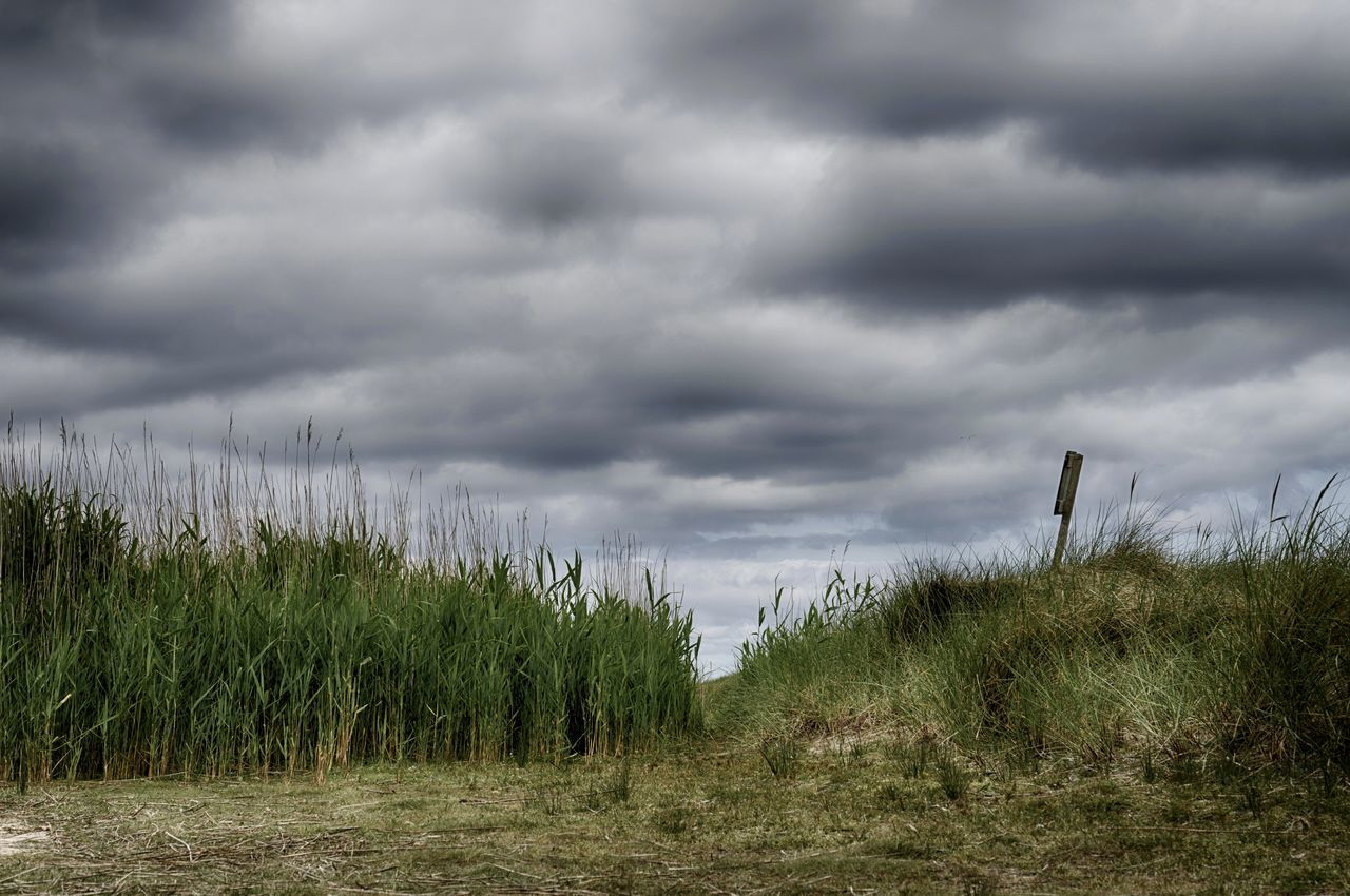 Amrum Grass Landscape_Collection Nature Trekking Beach Beauty In Nature Cloud - Sky Day Field Grass Grassland Growth Landscape Landscape_photography Nature Nature_collection No People Outdoors Scenics Sky Storm Cloud The Way Forward Tranquility