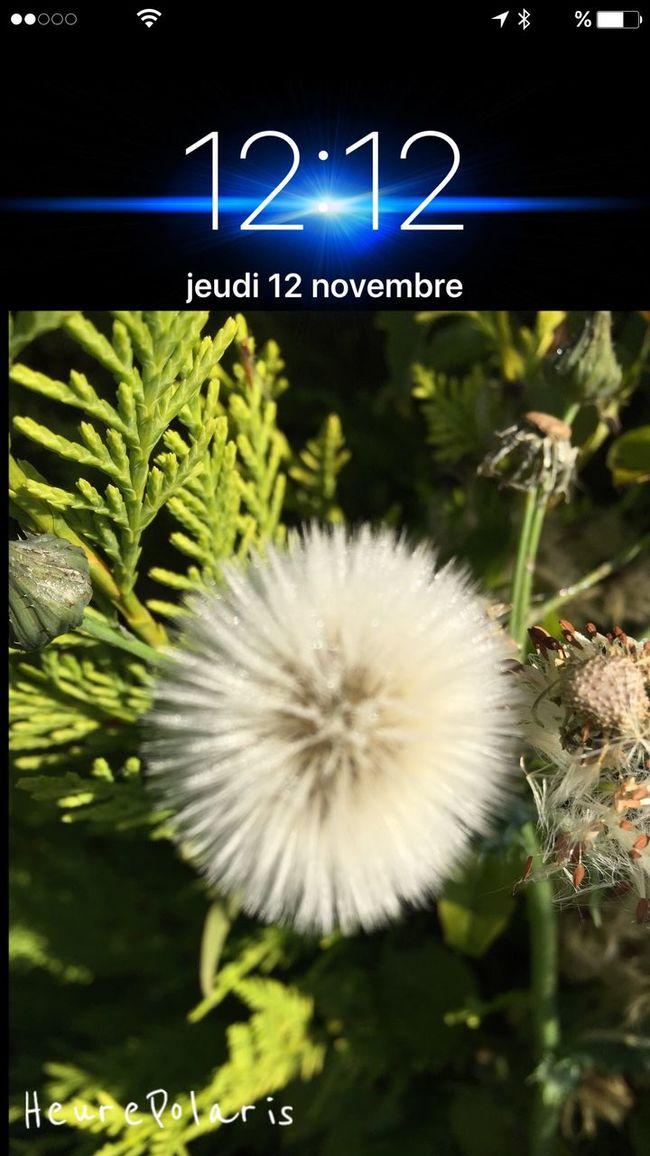 Le 12 à 12H12 HEURE POLARIS Hour Time Heure Sur Les Chemins Balade Dans Ma Ville Autumn Automne Fleur Flower Bon Appetit