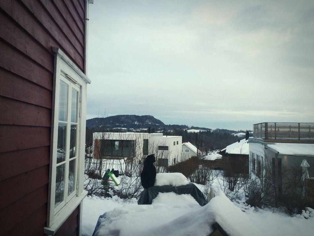Landscape Athome  Snow Norway Cat
