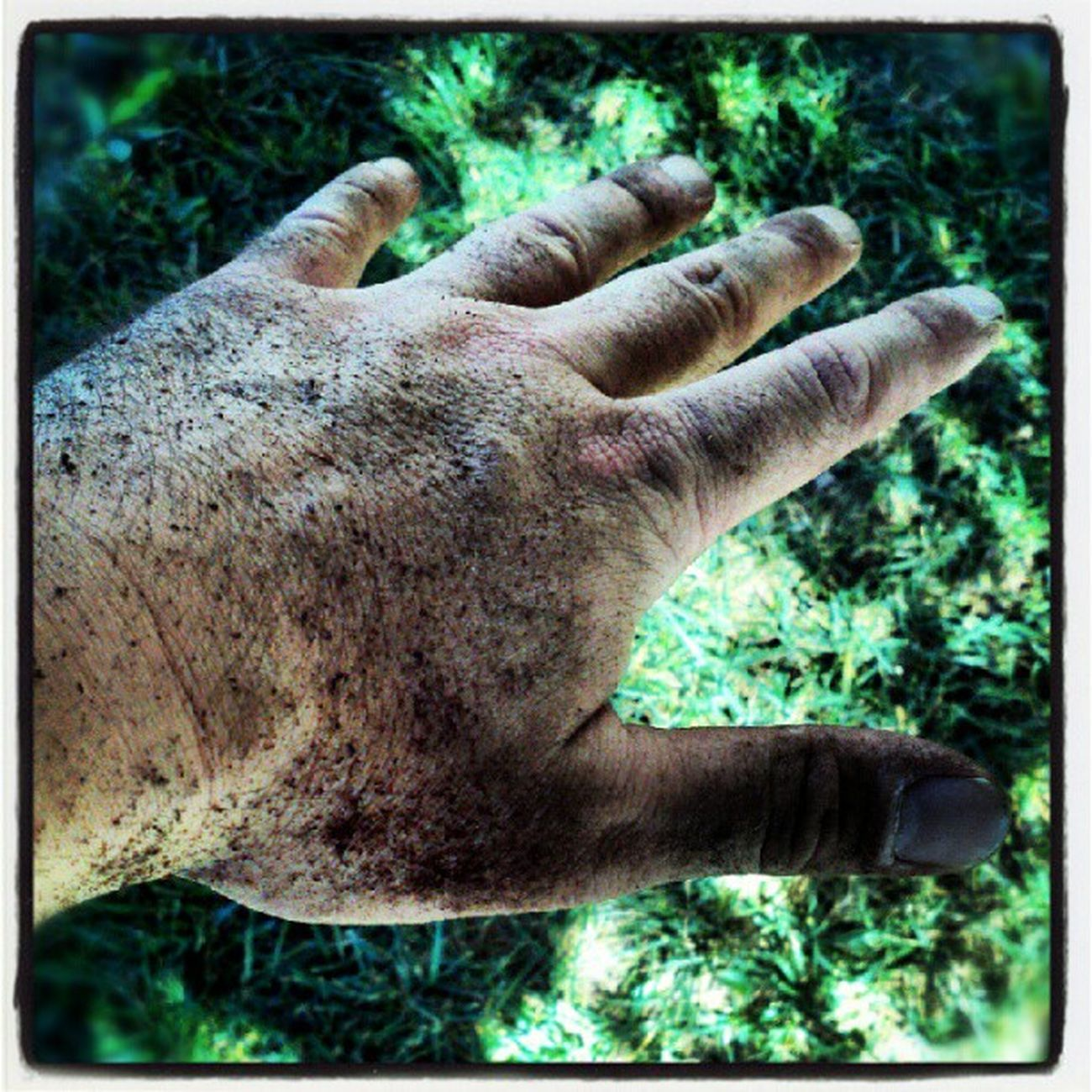 No green thumb here! Dirtyhands Gardening lol