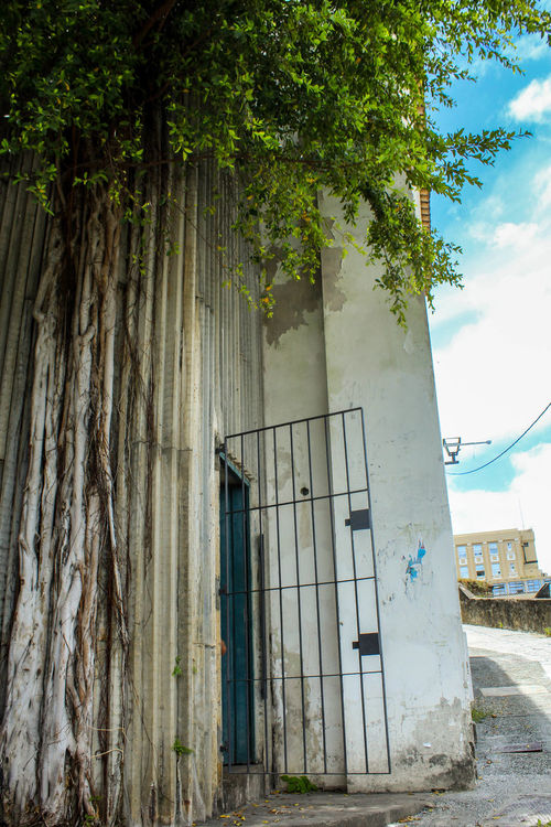 Architecture Bahia Brazil Building Exterior Built Structure Concrete Day Growth Lina Bo Bardi Nature No People Outdoors Salvador Sky Tree The Architect - 2017 EyeEm Awards BYOPaper!