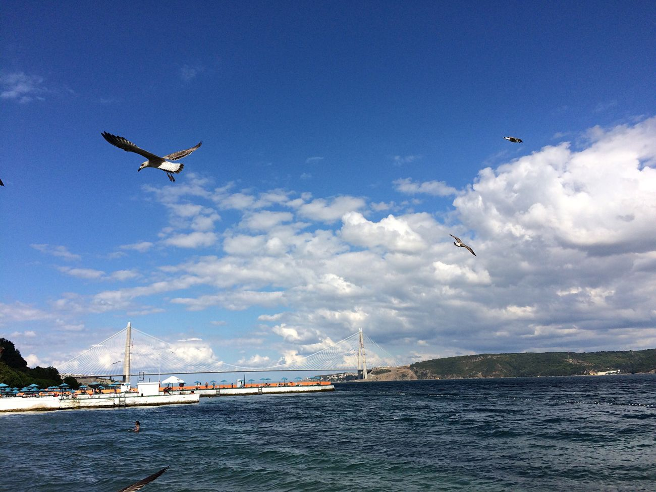 Flying Sky Animals In The Wild Bird Animal Themes Water Mid-air Sea Day Cloud - Sky Transportation City Animal Wildlife Outdoors No People Nature One Animal Scenics Architecture Beauty In Nature Beach Nature Like Cloud Wildlife
