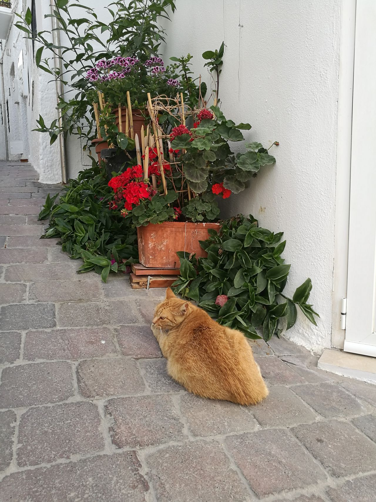 Gato en Mojacar Pets No People Day Domestic Animals Animal Themes Plant One Animal Mammal Growth Summer