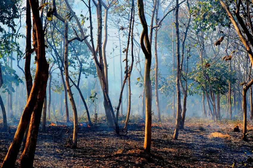 The Burning Jungle.... -at Mejia, Bankura, West Bengal, India. Nikkon D5100 55-300mm DOP: 29/01/2017 Beauty In Nature Branch Day Forest Forest Fire Landscape Nature No People Outdoors Scenics Sky Tranquility Tree Tree Trunk