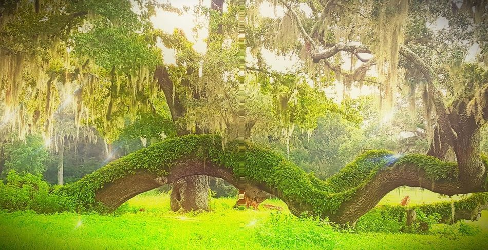 Grass Green Color Tree Tranquility Tranquil Scene Growth Plant Sunbeam Green Travel Destinations Lens Flare Non-urban Scene Tourism Outdoors Nature Scenics WoodLand Beauty In Nature Day Park