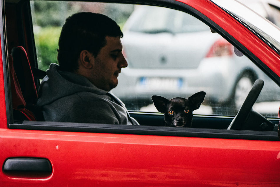 Beautiful stock photos of lustige tiere, car, window, taxi, transportation